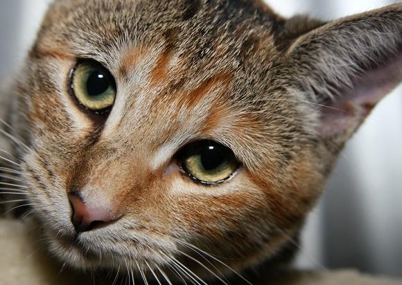 aliso-viejo-cat-photographer-3