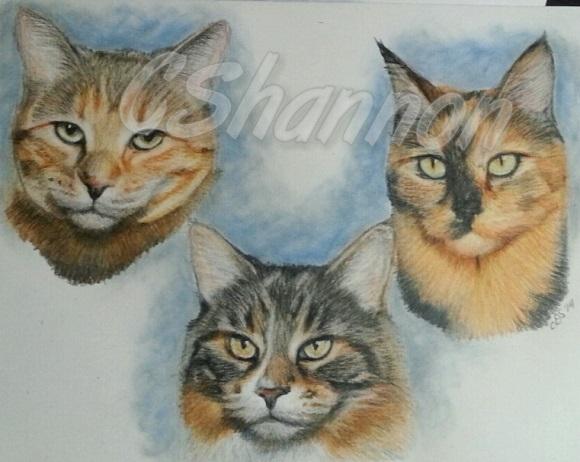 orange-county-pet-portraits