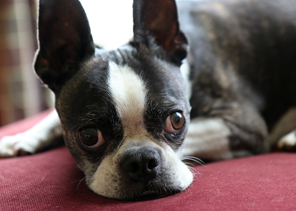 pet-photography-aliso-viejo-2
